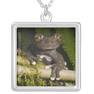 A captive Tapichalaca Tree Frog (Hyloscirtus Silver Plated Necklace