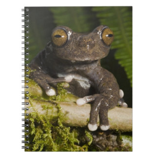 A captive Tapichalaca Tree Frog (Hyloscirtus Spiral Notebook