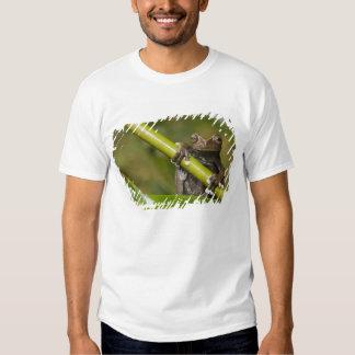 A captive Tapichalaca Tree Frog Hyloscirtus Tee Shirt