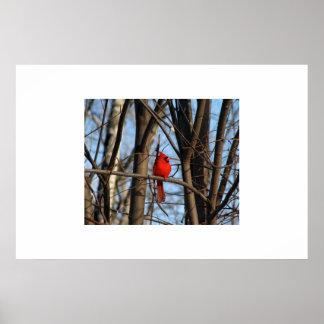 A Cardinal Poster