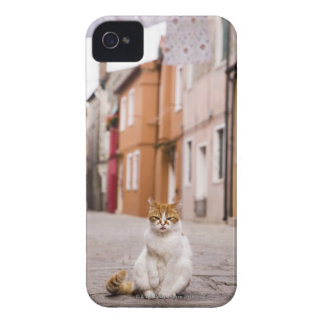 A cat in the streets of Burano, Italy.  2006. iPhone 4 Case