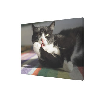 A Cat Licking It's Paw Canvas Print