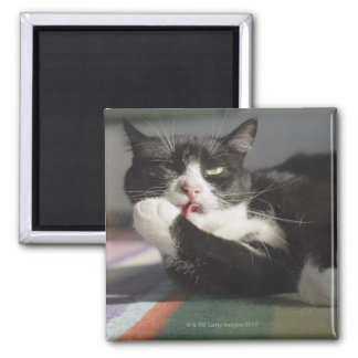 A Cat Licking It's Paw Fridge Magnet