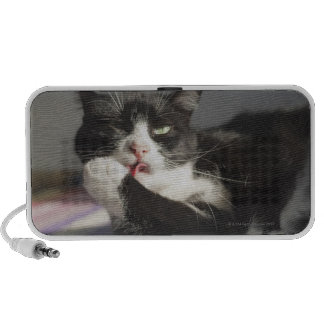 A Cat Licking It's Paw Speaker
