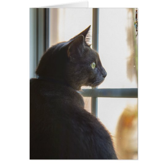 A cat offers a hello or sympathy card