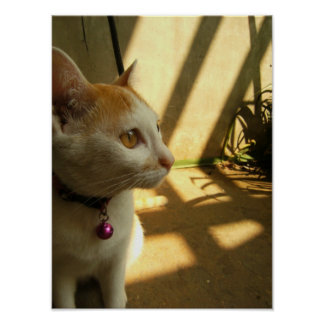 A Cat s Indulgence Print