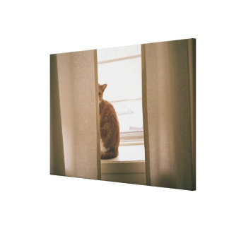 A Cat Sitting Behind The Curtains On A Window Canvas Print