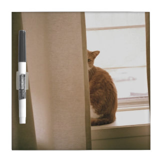 A Cat Sitting Behind The Curtains On A Window Dry Erase Board