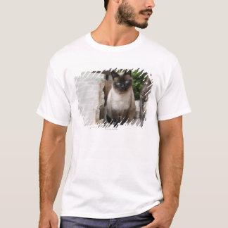 A Cat T-Shirt