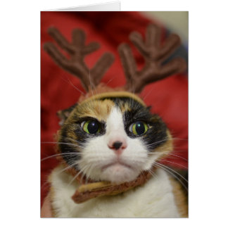 A cat wearing reindeer antlers card