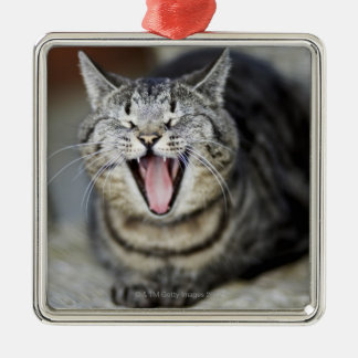 A cat yawning, Sweden. Christmas Ornament
