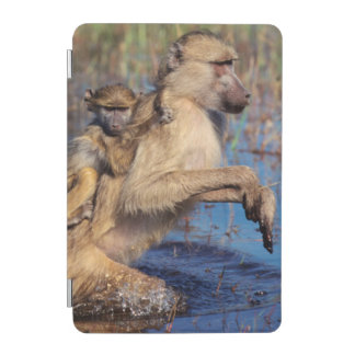 A Chacma Baboon carrying young through a river iPad Mini Cover