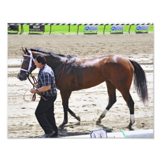 """A champion """"Dreaming of Julia"""" Photographic Print"""