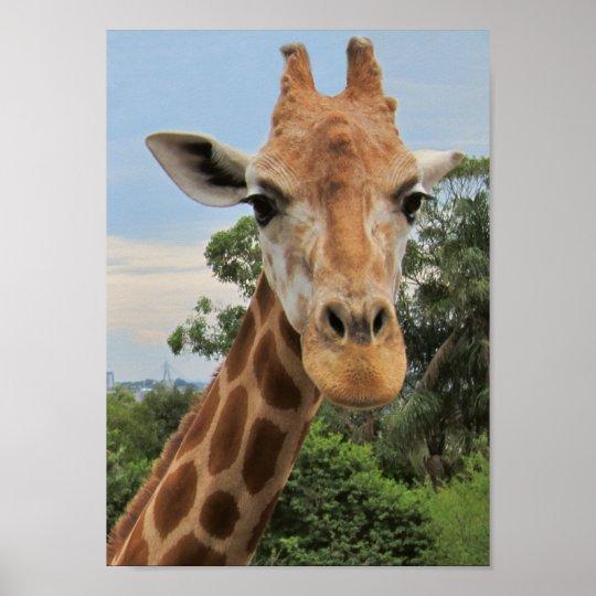 A Charming Giraffe Poster