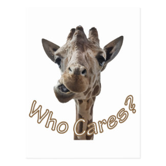 A cheeky Giraffe with attitude Postcard