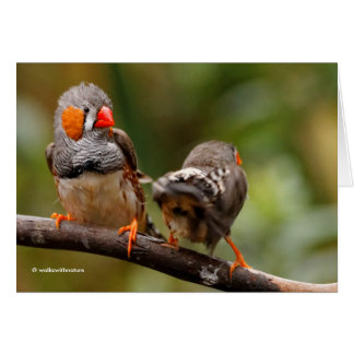 A Cheeky Pair of Zebra Finches Card