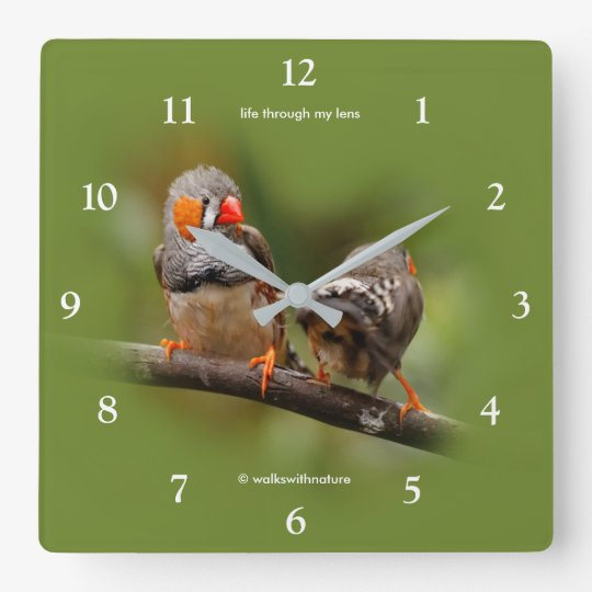 A Cheeky Pair of Zebra Finches Square Wall