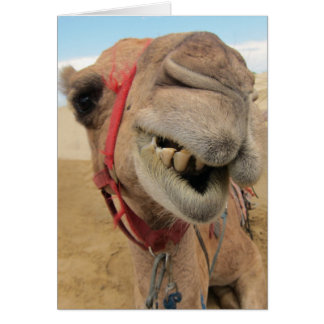 A Cheerful Camel Card