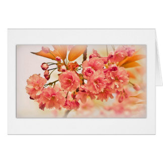 A cherry blossom Greeting Card