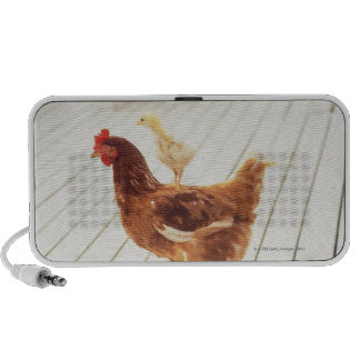 A Chicken and Two Chicks On a Wooden Floor, iPhone Speaker