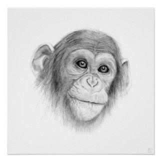 A Chimpanzee, Not Monkeying Around
