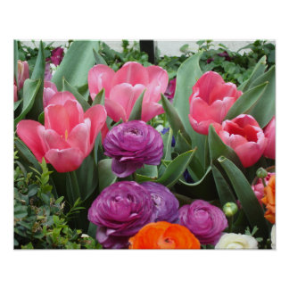 A Chorus of Pink Tulips Poster