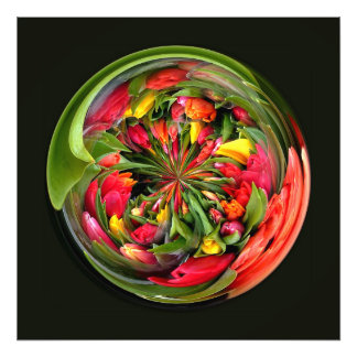 A CIRCLE OF TULIPS PHOTO