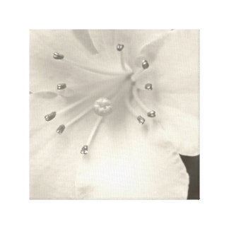 """A Close Up of a Lily"", B&W, Canvas Prints"