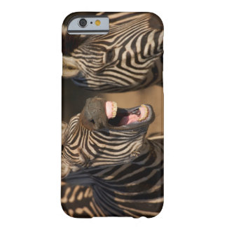 A close-up of a Zebra showing its teeth, Barely There iPhone 6 Case