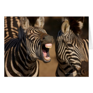 A close-up of a Zebra showing its teeth, Card