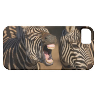 A close-up of a Zebra showing its teeth, iPhone 5 Cover