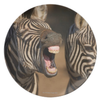 A close-up of a Zebra showing its teeth, Party Plate