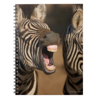A close-up of a Zebra showing its teeth, Spiral Notebook
