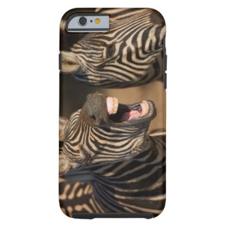 A close-up of a Zebra showing its teeth, Tough iPhone 6 Case