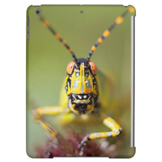 A close-up of an Elegant Grasshopper