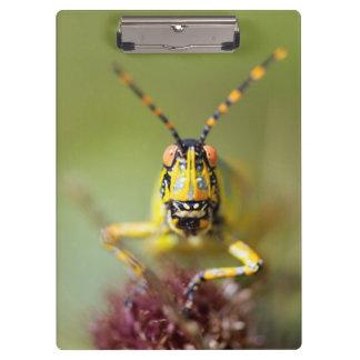A close-up of an Elegant Grasshopper Clipboard