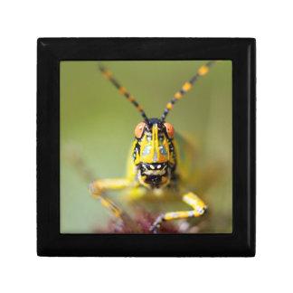 A close-up of an Elegant Grasshopper Gift Box