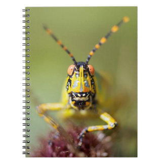 A close-up of an Elegant Grasshopper Notebooks