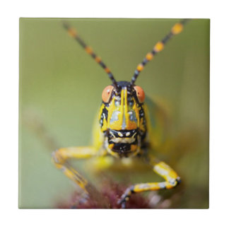 A close-up of an Elegant Grasshopper Tile