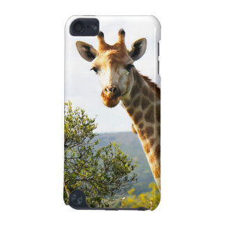 A close up photo of a male Giraffe on Safari iPod Touch (5th Generation) Case