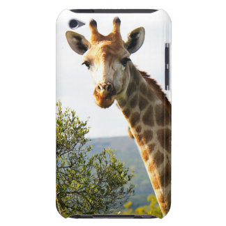 A close up photo of a male Giraffe on Safari iPod Touch Cases
