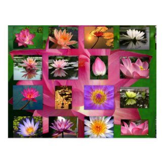 A Collage of Beautiful Water Lily and Lotus Images Post Cards