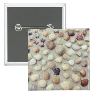 A Collection Of Seashells 15 Cm Square Badge