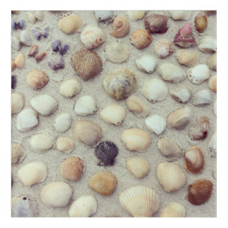 A Collection Of Seashells Acrylic Wall Art