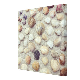 A Collection Of Seashells Canvas Print