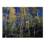 a colorado fall2 postcards