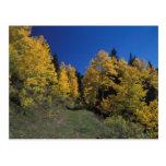 a colorado fall3