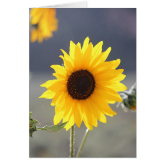 A Colorado Sunflower Card