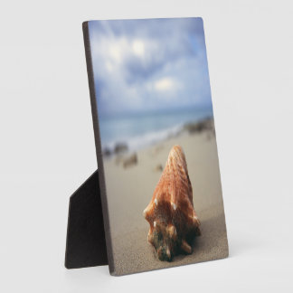 A Conch Shell On The Beach | St. Croix, Usvi Display Plaque