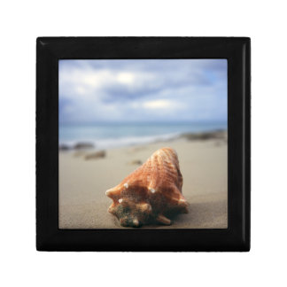 A Conch Shell On The Beach | St. Croix, Usvi Small Square Gift Box